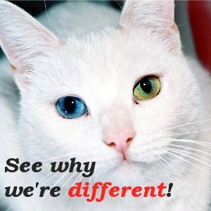 Cat with Blue and Green Eyes - See why we're Different