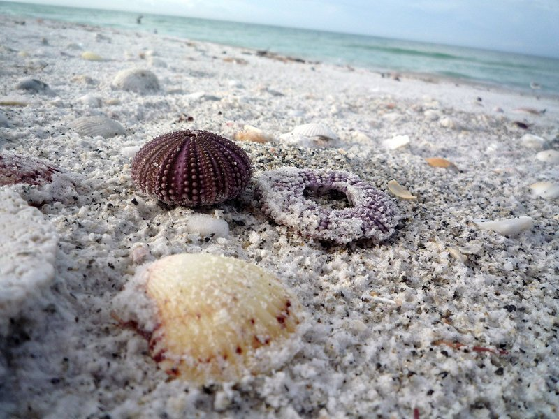 shells on Longboat Key, Fl, one of the safest towns in Florida