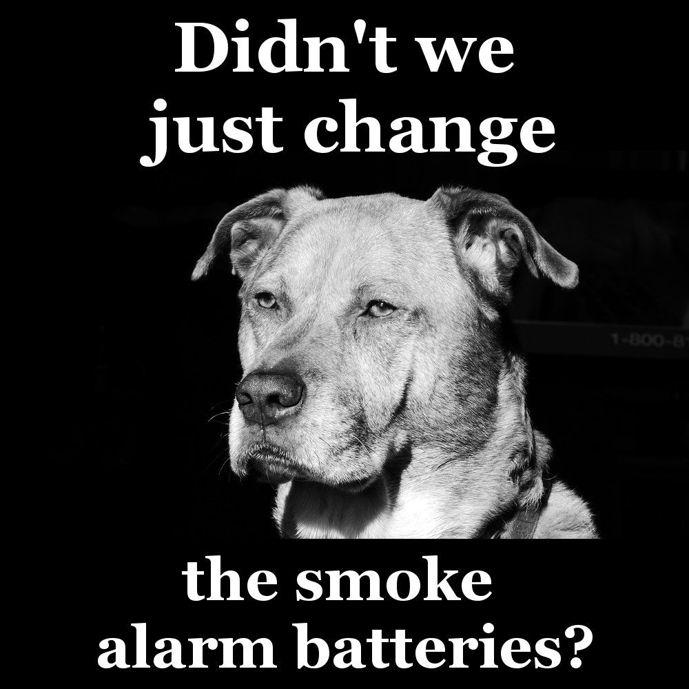 tired dog meme smoke alarm batteries