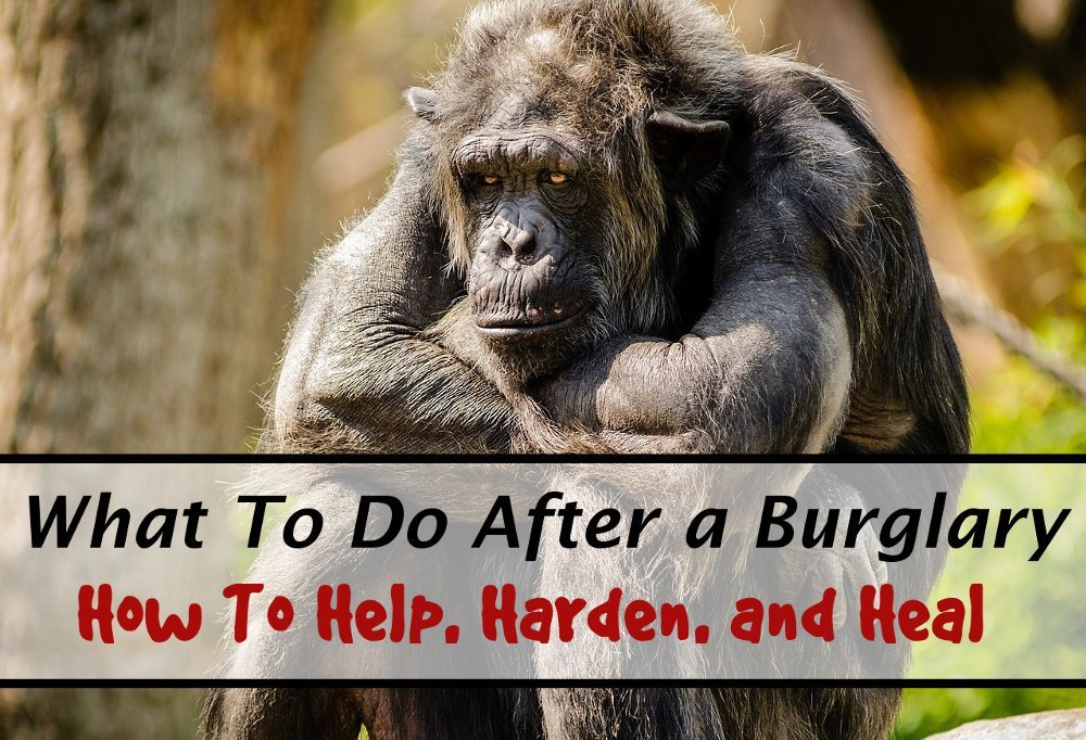 sad chimp - what to do after a burglary